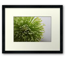 Green flower................ Framed Print
