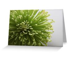 Green flower................ Greeting Card