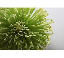 Green flower................ Photographic Print