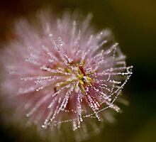 Rare............ by Nina  Matthews Photography