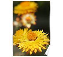 Garden Variety ........... Poster