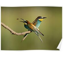 European Bee-Eaters Poster