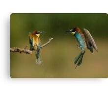 European Bee-Eater in Flight Canvas Print