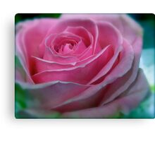 BUBBLEGUM PINK ROSE Canvas Print