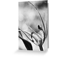 Dancing orchid Greeting Card