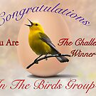 Challenge Winner for the Birds Banner by imagetj