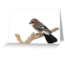 Eurasian Jay Perched on Tree Branch Greeting Card