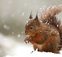 Snowy Squirrel by dgwildlife