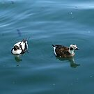 Sea Ducks by Marie Van Schie