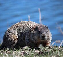Groundhog Pose by Leslie van de Ligt