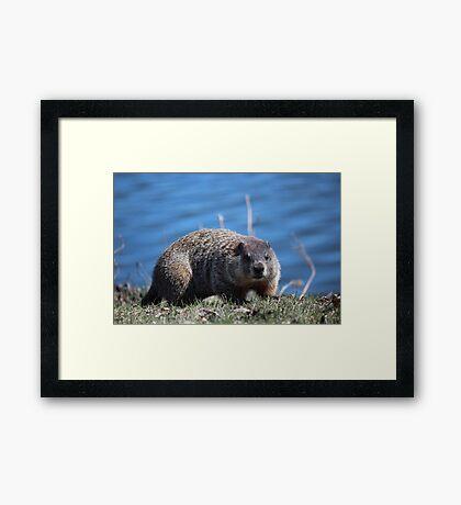 Groundhog Pose Framed Print