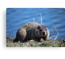 Groundhog Pose Canvas Print