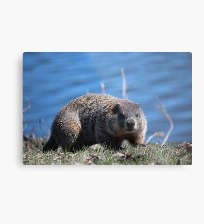 Groundhog Pose Metal Print