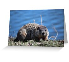 Groundhog Pose Greeting Card
