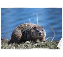 Groundhog Pose Poster