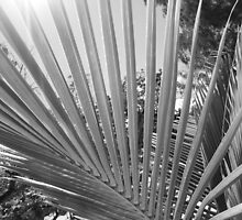 Palm Tree Fronds by SnapitRach