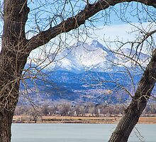 View Through The Trees To Longs Peak by Bo Insogna