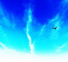 Bird In The Sky by Vincent J. Newman