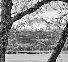 View Through The Trees To Longs Peak BW by Bo Insogna