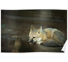 Little Lonely Fox Poster
