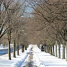 Pelham Parkway Winter by Alberto  DeJesus