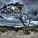 Foreboding - approaching storm: HDR at Rheban Beach, Orford, Tasmania, Australia by PC1134
