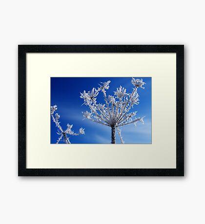 Winter Jewels #1 Framed Print