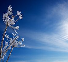 Winter Jewels #2 by Mark Iocchelli