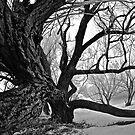Sleepy Hollow by Mark Iocchelli