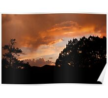 Dusk in the Gila Forest Poster