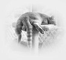 Sleeping It Off! by Ellen Cotton