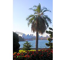 Sydney Harbour from the Park Photographic Print