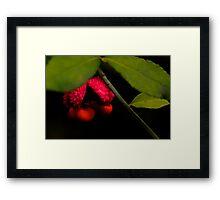 Woodland Strawberry Bush Bloom Framed Print