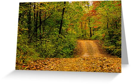 Opossum Creek Road by NatureGreeting Cards ©ccwri