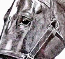 Beautiful Horse Sticker
