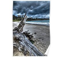 Driftwood HDR - Rheban Beach, Orford, Tasmania, Australia Poster