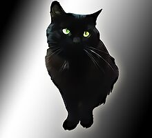 Black cat by augustinet