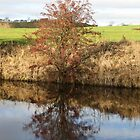 A REFLECTION IN THE CANAL AT WEST MARTON , YORKSHIRE . by Dahlia48