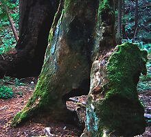 Moss Covered Remnants by stellardia