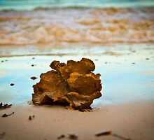 Sea sponge at sunset by shezana30