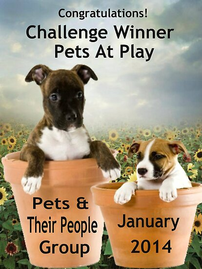 Banner Design for Challenge Winner.  Pets at Play. by Staffaholic