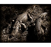See Ya Later Alligator Photographic Print