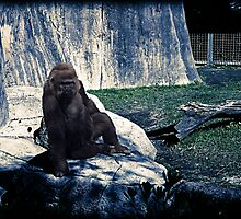 Gorilla by StudioBlack