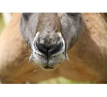 Nosey parker Photographic Print