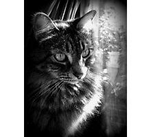 I Iz Kitty 2 Photographic Print