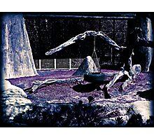 Purple Grass Photographic Print
