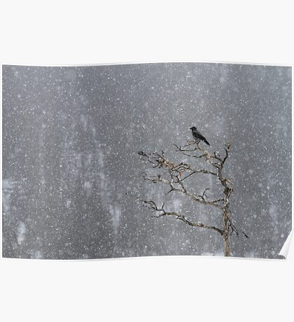 Hooded Crow at Havy Snowfall Poster