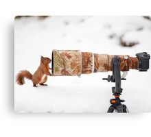 Red Squirrel Posing Canvas Print