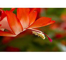 Ephemeral Bloom Photographic Print