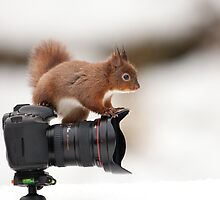 Little Photographer  by dgwildlife
